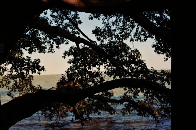 Tree-Bahar Dar
